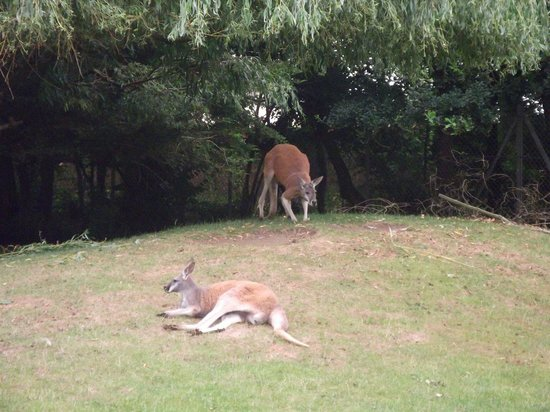 Banham Zoo: Two visitors from Australia
