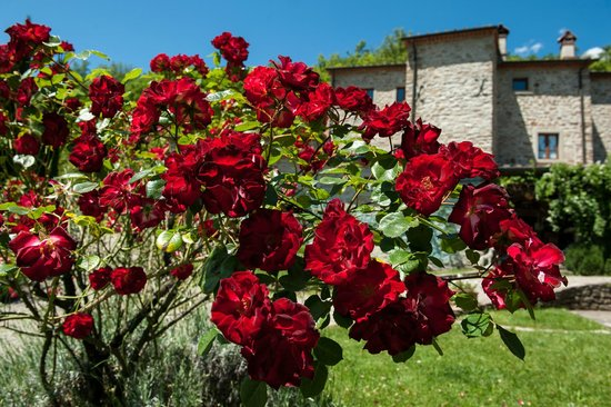 Agriturismo Azienda Agricola il Pozzo: le rose rosse red roses