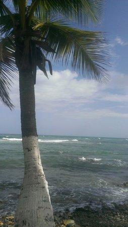 Caribe Playa Beach Hotel : View from the beach