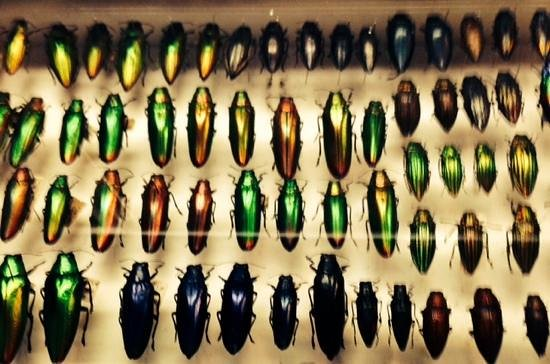 Daintree Entomological museum : amazing private collection of bettles