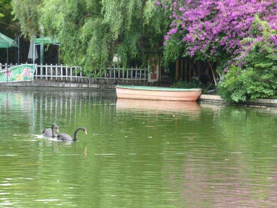 Green Lake Hotel : Black Swans in Green Lake