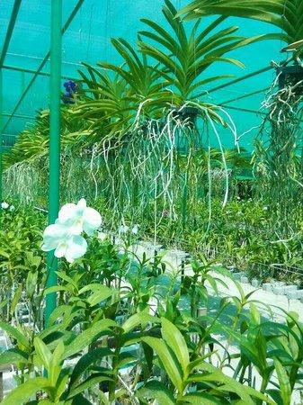Four Seasons Resort Maldives at Landaa Giraavaru: Orchid garden