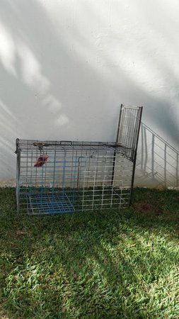 Ambre Resort & Spa: Dog catcher cages out side our rooms