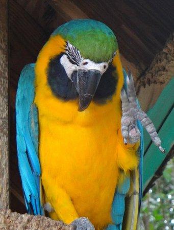 Jungle Erv's Everglades Airboat Tours: bird