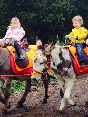 Smithills Open Farm : Donkey Ride Fun