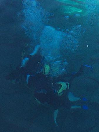 Ago Travel Day Tours: Scuba diving :)
