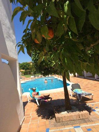 OH Diana Park : Oranges growing around us