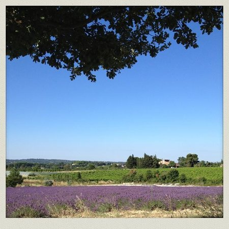 One Day in Provence - Day Tours : Lavender fields near Aix en Provence, One Day in Provence Private tours