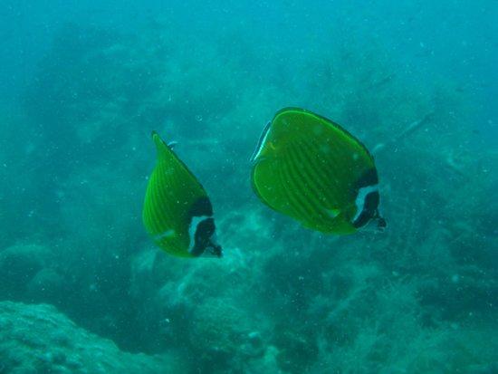 Bophut Diving Tours: shark island reef
