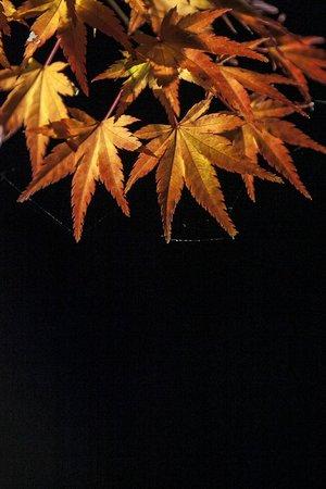 Eikan-dō : 永觀堂 夜楓