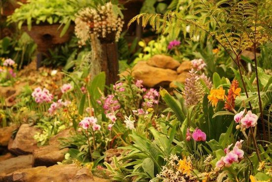 Durban Botanic Gardens: Orchid garden is out of this world