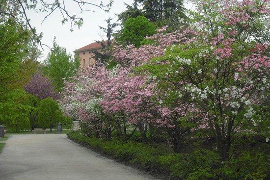 Musei Civici di Pavia Castello Visconteo: in primavera