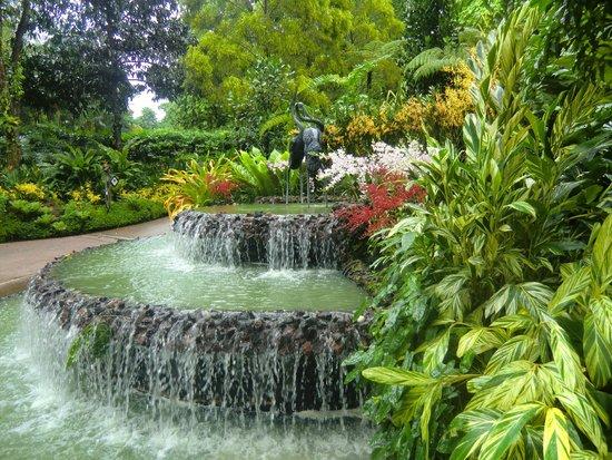 Rainforest walk photo de jardin botanique de singapour for Au jardin les amis singapore botanic gardens