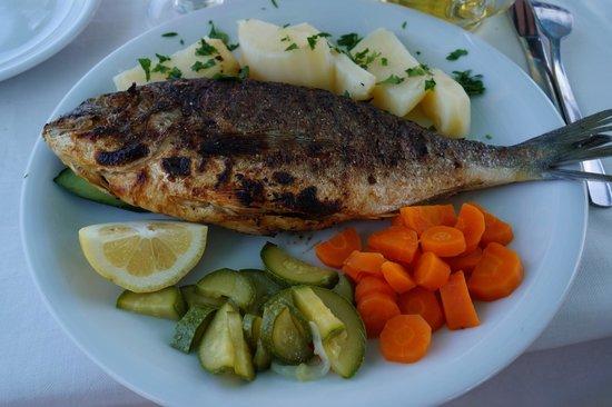 Argo: Fresh fish!