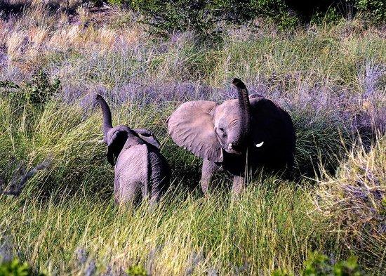 Palmwag Lodge: Desert elephants at Palmwag