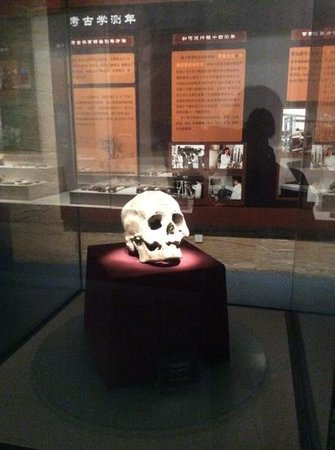 Shandong Museum : A skull from a burial site.