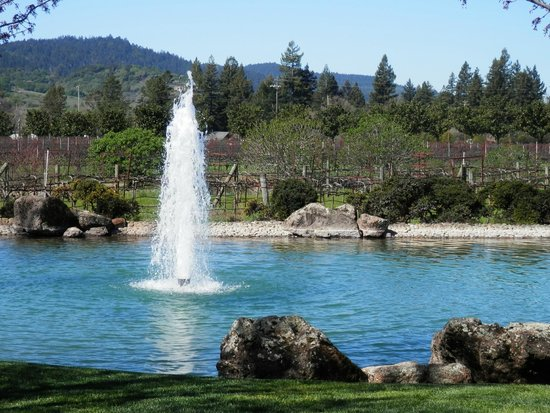 Kunde Family Winery: fountain