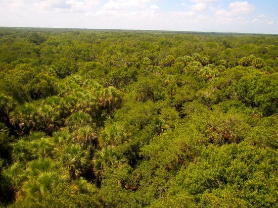 Myakka River State Park: Forest as far as your eye can see from the top of the 74 foot tower.