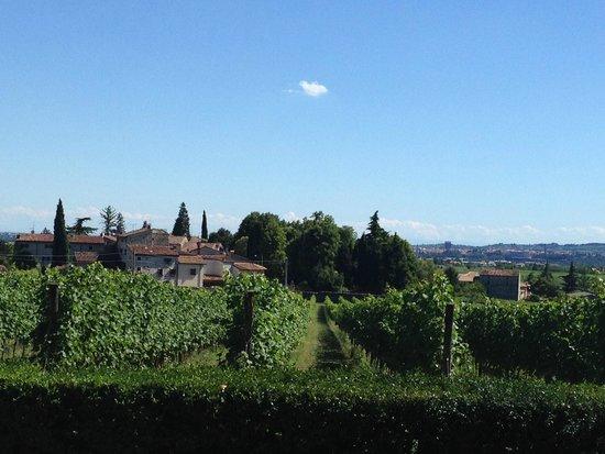 Agriturismo Antico Casale Bergamini: neighbourhood vineyards