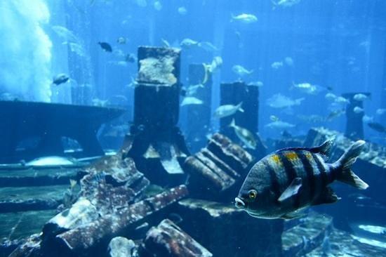 The Lost Chambers Aquarium: my fish friend