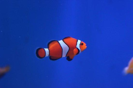 Mote Marine Laboratory and Aquarium: Un poisson