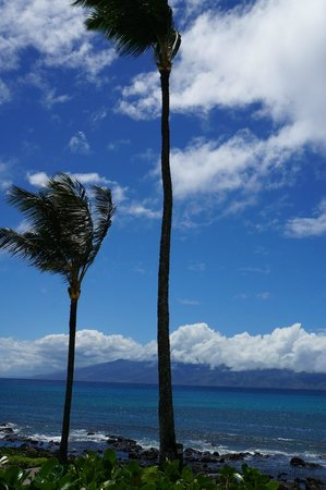 Gazebo Restaurant at Napili Shores: Lunch with a view