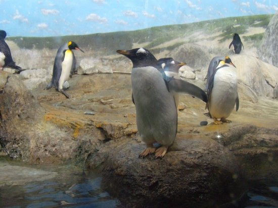 Riverbanks Zoo and Botanical Garden: pengin exhibit