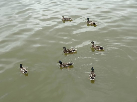 Old Town Waterfront: Feed the ducks on the boardwalk!