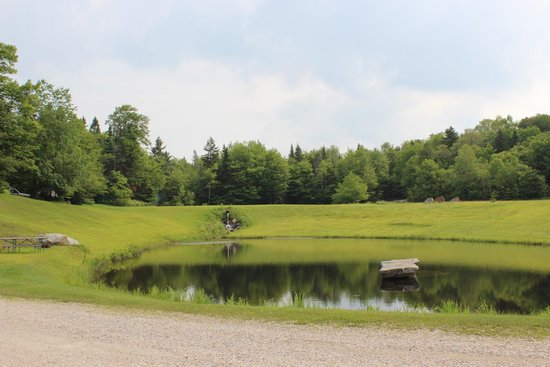 Greenwood Lodge and Campsites: swimming pond