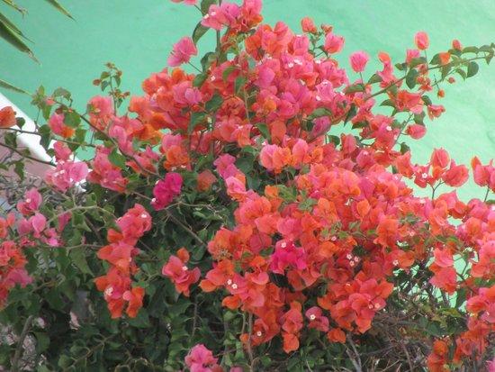 Tsokkos Beach Hotel: цветы у бассейна