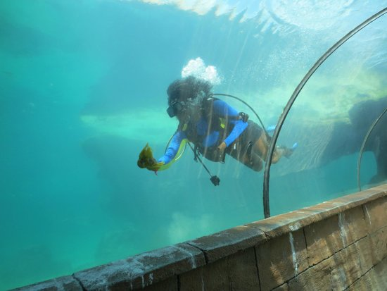 Marine Habitat at Atlantis : Diver in Tank