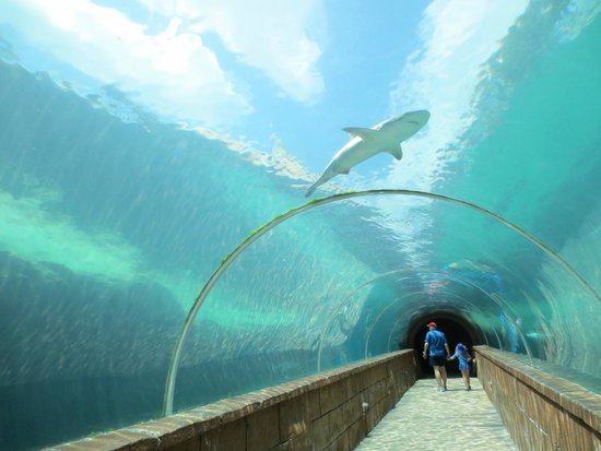 Marine Habitat at Atlantis : Tunnel Walk
