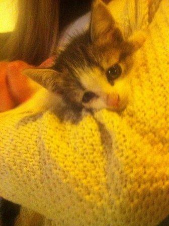 Mythos Studios: Beautiful kitten Jonathan!