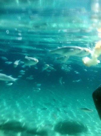 Mythos Studios: Snorkelling at koukanaries, the fish love bread!!!!!