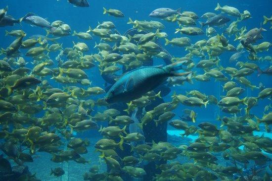 Atlantis, Beach Tower, Autograph Collection : Peixes e mais peixes