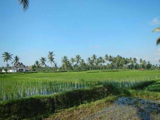 Tanah Merah Art Resort : Not far from the resort