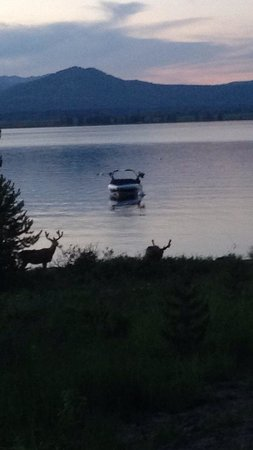 Signal Mountain Lodge: Deer by lake.