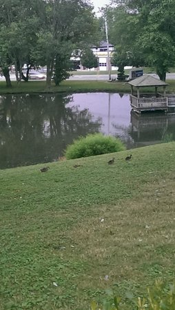 Best Western Plus Concordville Hotel: The pond with ducks and geese