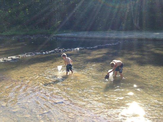 Blue Bend Recreation Area: Crawfishing