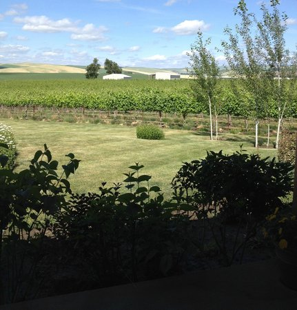 Walla Faces Inns at the Vineyard: View of Vineyard from our porch