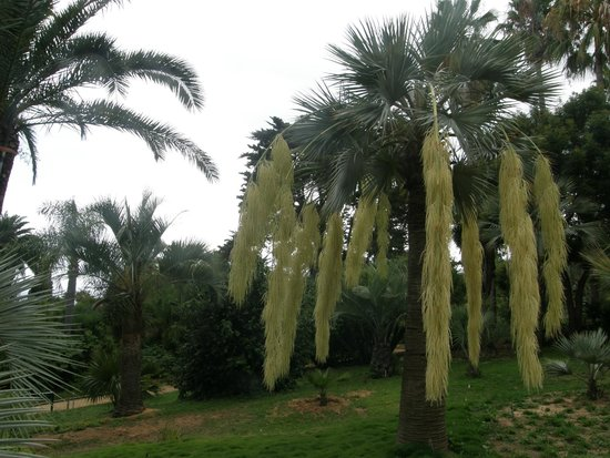 Hotel Esplendid: ogród botaniczny