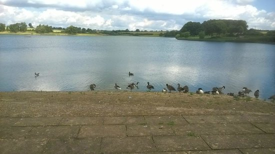 Sywell Country Park: Bird life