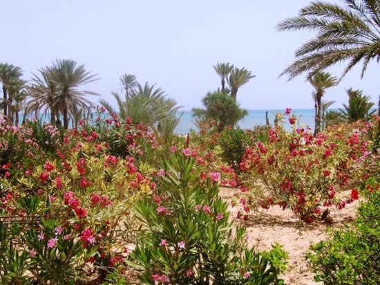 El Mouradi Djerba Menzel: jardins