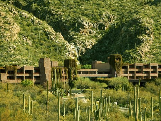 Loews Ventana Canyon Resort: Surrounded by Saguaros