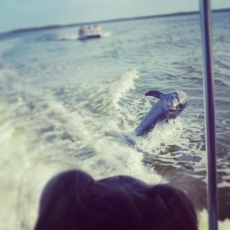 Good Time Charters and Tours : Dolphins following our boat!
