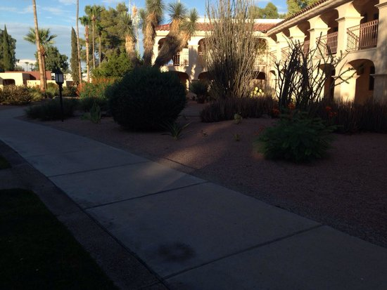Scottsdale Plaza Resort : You can't really see them but there are two rabbits playing in the bushes.