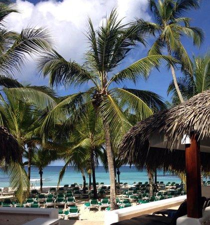 Viva Wyndham Dominicus Beach : Beach