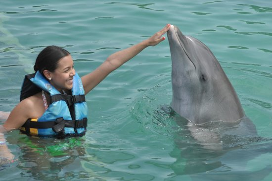 Dolphin Discovery : Nose