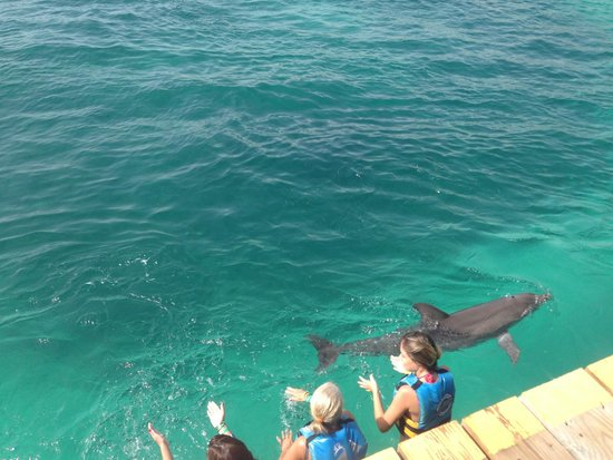 Dolphin Discovery : Group
