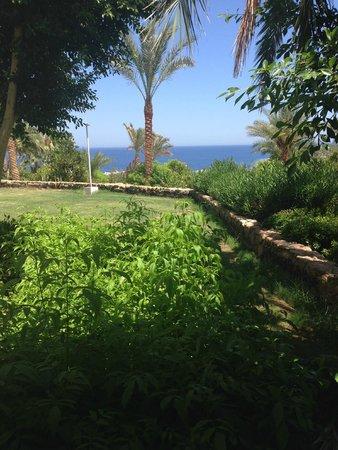 Domina Coral Bay Oasis: вид с балкона